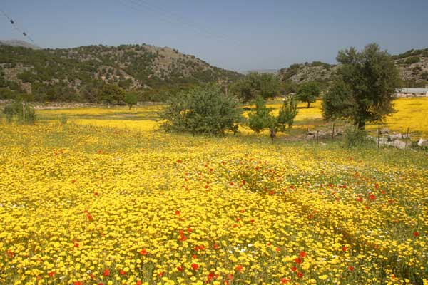 Wild Flowers Trees And Shrubs On Crete Plants Species Rarities